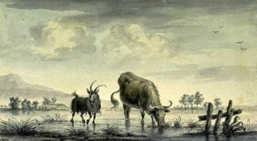 Goat And Bull Drinking By A Lake